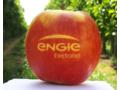 Pommes avec logo 2