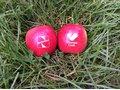 Pommes avec logo 12
