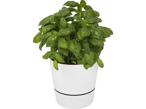 Pot de cuisine simple Herbs