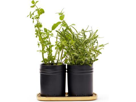 Monte herb set