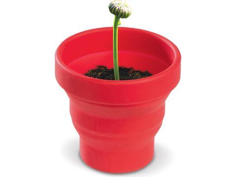 Flowerpot Daisy