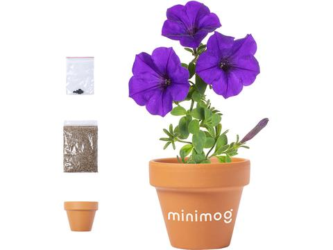 Terracotta bloempot petunia's