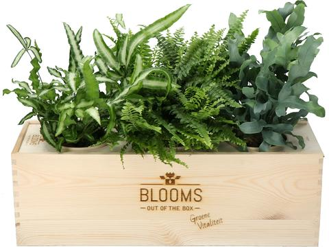 Bloomsbox met luchtzuiverende varens