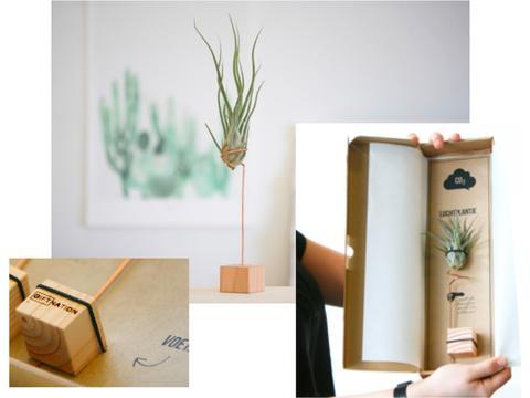 Luchtplantje op houten blokje