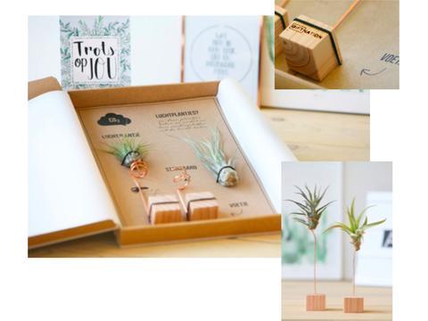 Set van 2 Luchtplantje op houten blokje