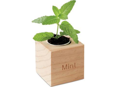 Menta Herb pot