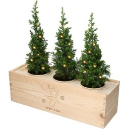Bloomsbox met kerstboompjes